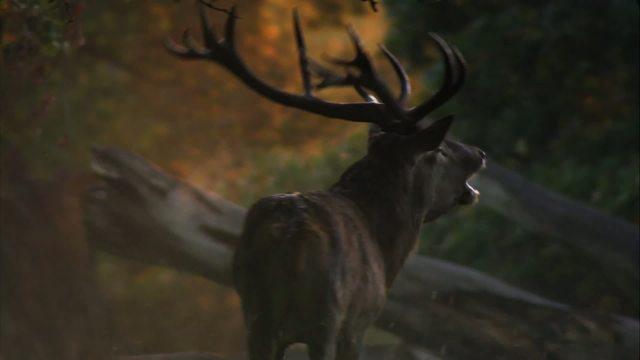 Das grüne Wunder - Unser Wald Video 3